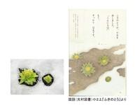 ふきのとうPP5.jpg