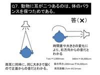 耳は何のためにあるのか?⑦.pptx.jpgのサムネール画像