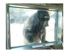 動物園の熊.jpg